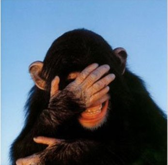 Embarrassed Chimp 2