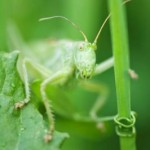The Grasshopper's Dilemma