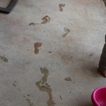 Footprints in the Dog Water