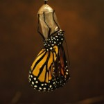 The Lesson of the Butterfly