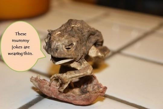Frog Mummy 3