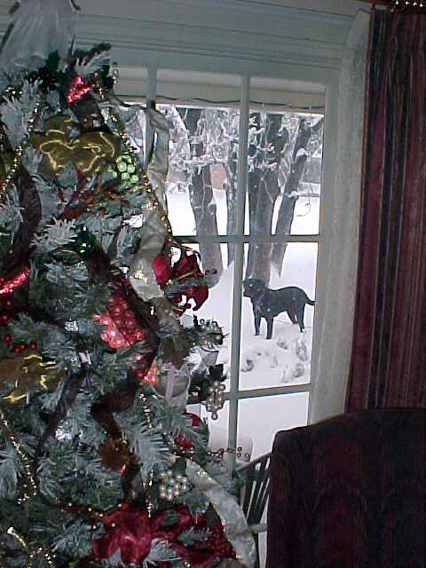 Lubbock Christmas Card