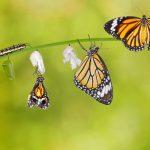 Newness of Life – My Declaration